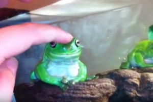 This Poor Little Frog Has Had All Hes Going to Take