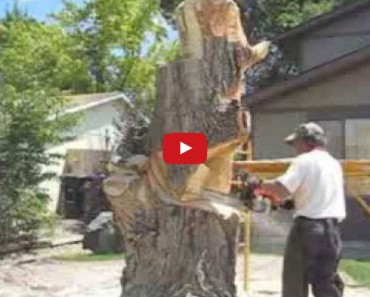 You Won't Believe What This Guy Does to This Tree With a Chain Saw! Hint: He's Not Cutting It Down!