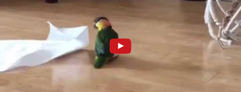 Little Parrot Does the Mexican Hat Dance